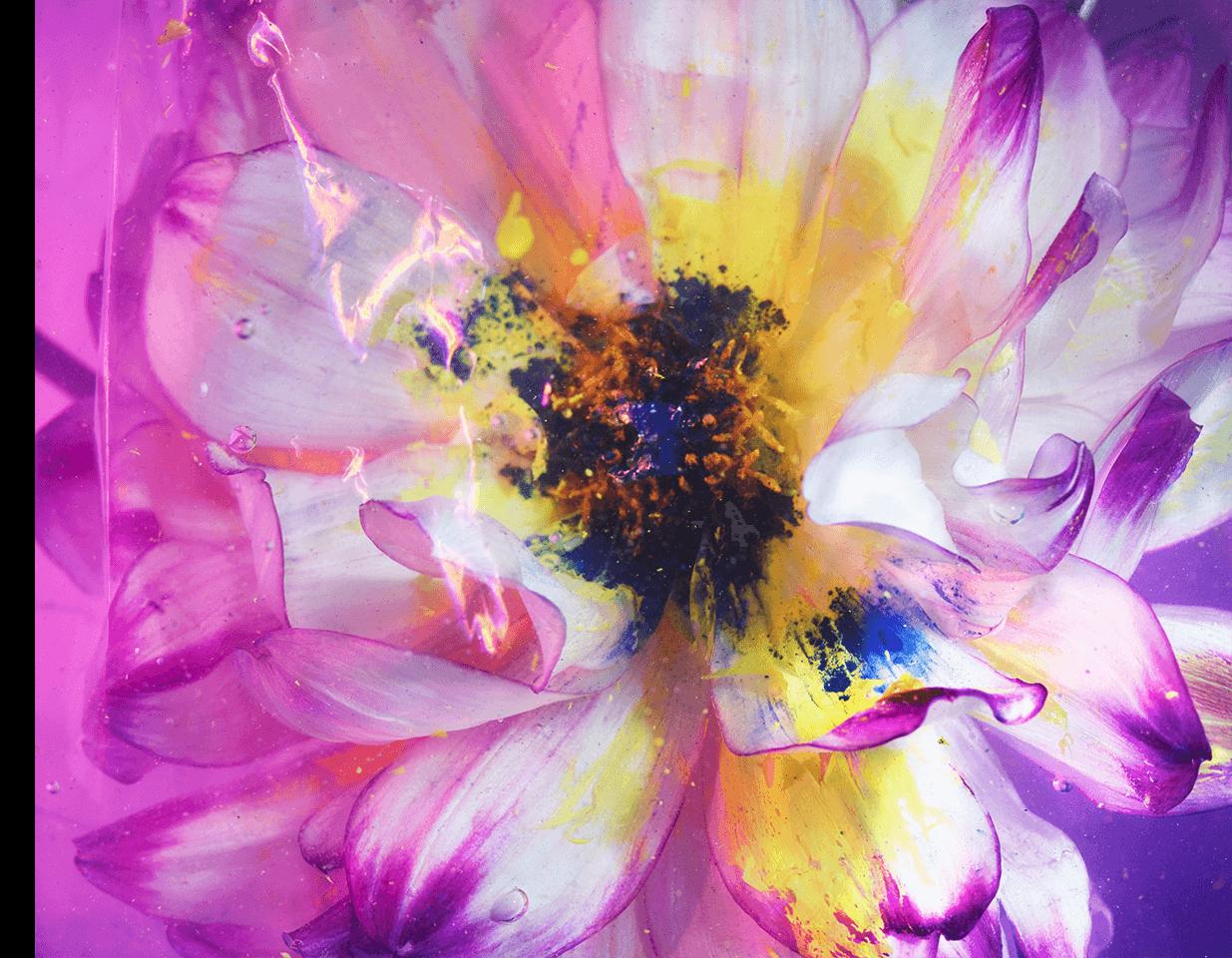 fleurs_du_mal_01